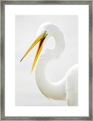 Egret Up Close Framed Print by Paulette Thomas