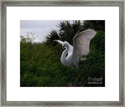 Framed Print featuring the photograph Egret Wings by Art Whitton
