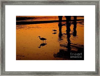 Egrets At Dusk Framed Print