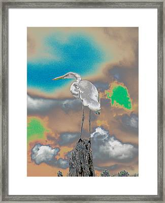 Egrit Framed Print by Perry Conley