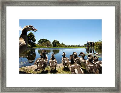 Egyptian Geese Framed Print by Fabrizio Troiani