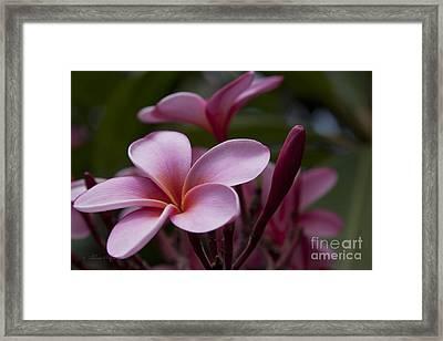 Eia Ku'u Lei Aloha Kula - Pua Melia - Pink Tropical Plumeria Maui Hawaii Framed Print by Sharon Mau