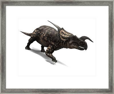 Einiosaurus Dinosaur, Artwork Framed Print by Sciepro