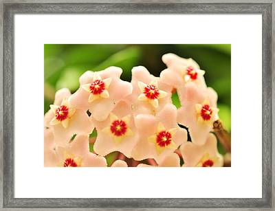 Framed Print featuring the photograph Eis A Hoya by Puzzles Shum