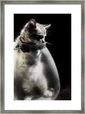 Framed Print featuring the photograph El Kitty by Jessica Shelton