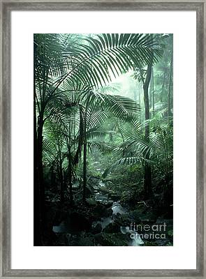 El Yunque National Forest Palms And Stream Framed Print