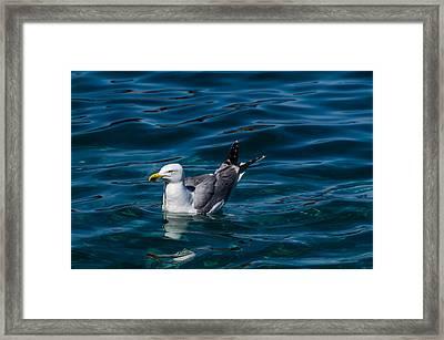 Elba Island - Solitary Bird - Ph Enrico Pelos Framed Print