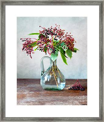Elderberries 06 Framed Print by Nailia Schwarz