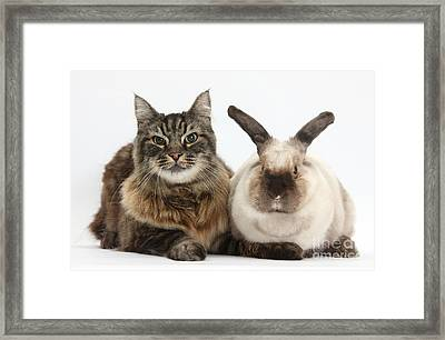 Elderly Cat With Colorpoint Rabbit Framed Print
