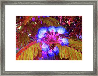 Electric Mimosa Framed Print by Juliana  Blessington