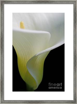 Elegance Framed Print by Beth Buelow