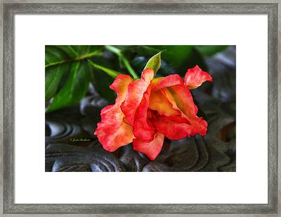 Framed Print featuring the photograph Elegance by Joan Bertucci
