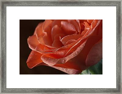 Elegance  Framed Print by Shirley Mitchell
