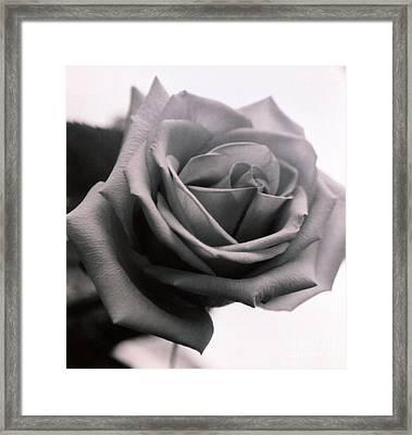 Elegance Framed Print by Thomas Luca