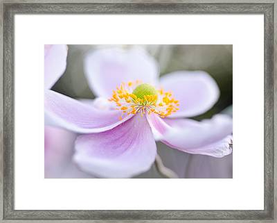 Elegant Anemone Framed Print