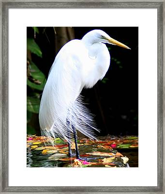 Elegant Egret At Water's Edge Framed Print