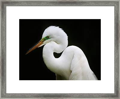 Elegant Great White Egret Framed Print by Paulette Thomas