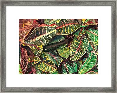 Elena's Crotons Framed Print by Marionette Taboniar