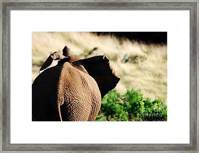 Elephant And His Butt Framed Print by Alexandra Jordankova