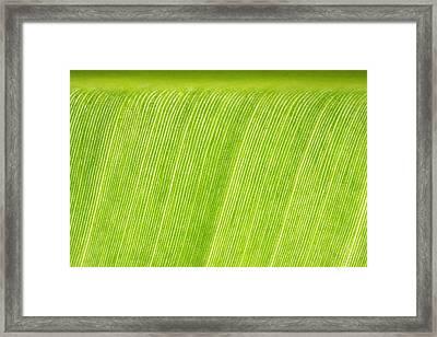 Elephant Ear Leaf 2 Framed Print by Will Czarnik