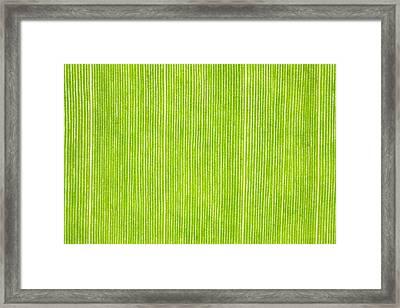 Elephant Ear Leaf Framed Print by Will Czarnik
