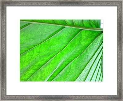 Elephant Ear Plant Leaf Framed Print