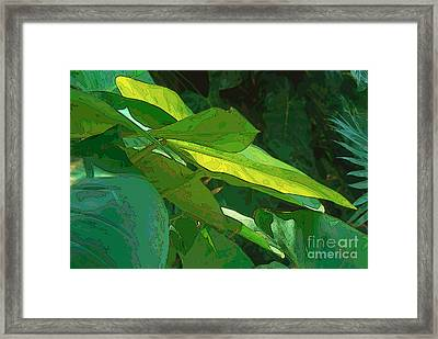 Elephant Ears 2 Framed Print