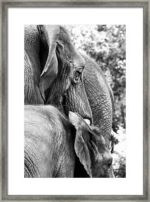 Elephant Ears Framed Print