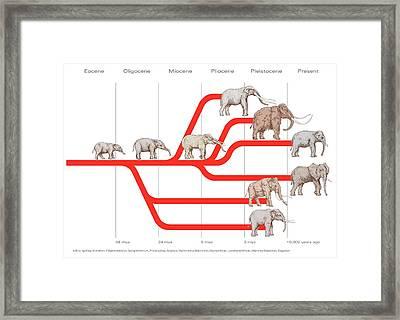Elephant Evolution, Diagram Framed Print by Gary Hincks
