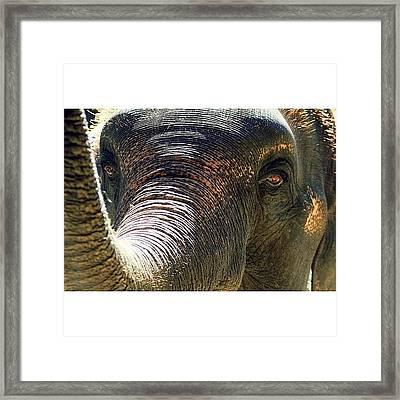 Elephant Eye..#travel #thailand Framed Print
