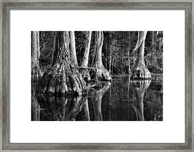 Framed Print featuring the photograph Elephant Feet by Dan Wells