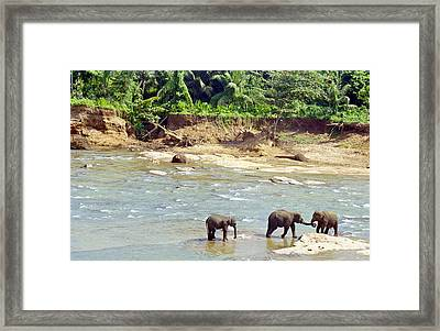 Elephant Greeting Framed Print by Paul Cowan