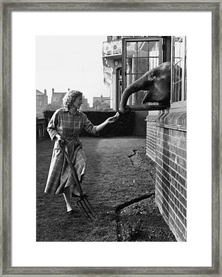 Elephant In The House Framed Print by John Drysdale