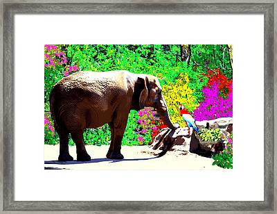 Elephant-parrot Dialogue Framed Print by Rom Galicia