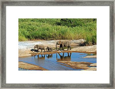 Elephant Reflections And The Sand River Framed Print