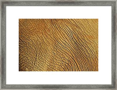 Elephant Skin Framed Print by Daniela Duncan