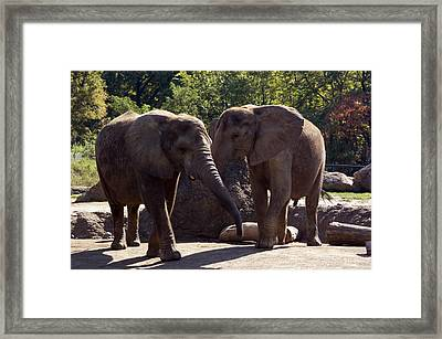 Elephants At The Pittsburgh Zoo Framed Print by Stacy Gold