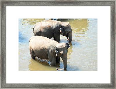Framed Print featuring the photograph Elephants In Water by Pravine Chester