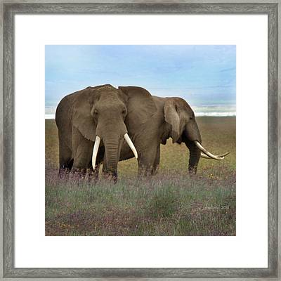Elephants Of The Crater Framed Print by Joseph G Holland