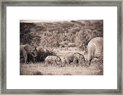Elephants Walking In A Row Samburu Kenya Framed Print by David DuChemin