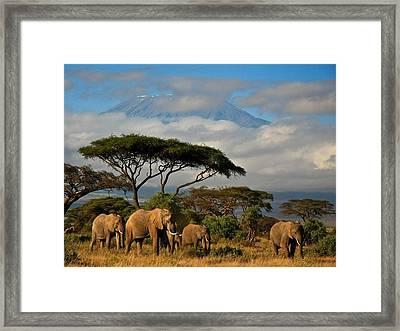 Elephantskenya Framed Print