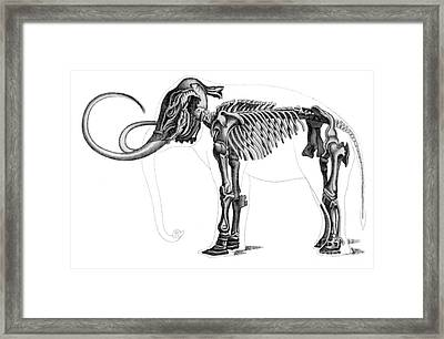Elephas, Extant Cenozoic Mammal Framed Print by Science Source