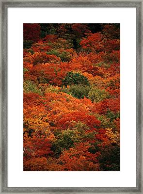Elevated View Of Autumn Foliage Framed Print by Raymond Gehman