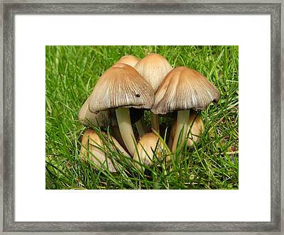 Elfin Village Framed Print by Dennis Leatherman