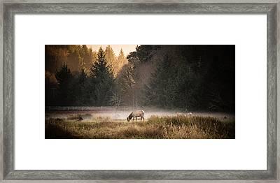 Elk Camp Framed Print by Randy Wood