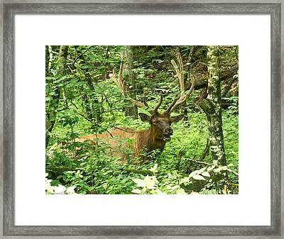 Elk In The Forest   Framed Print by Glenn Lawrence