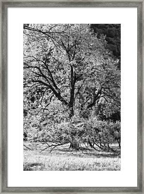 Elm In Black And White Framed Print by Rick Berk