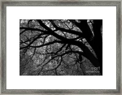 Elm Tentacles Framed Print by Fred Lassmann