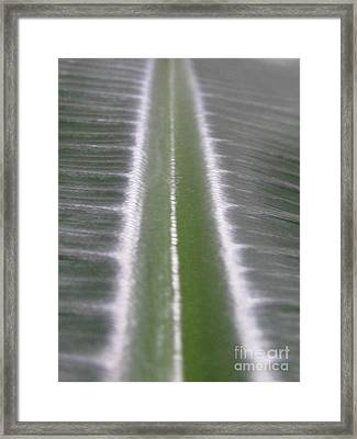 Elongating Framed Print