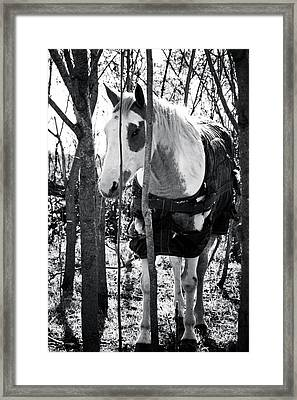 Elusive Framed Print by Toni Hopper